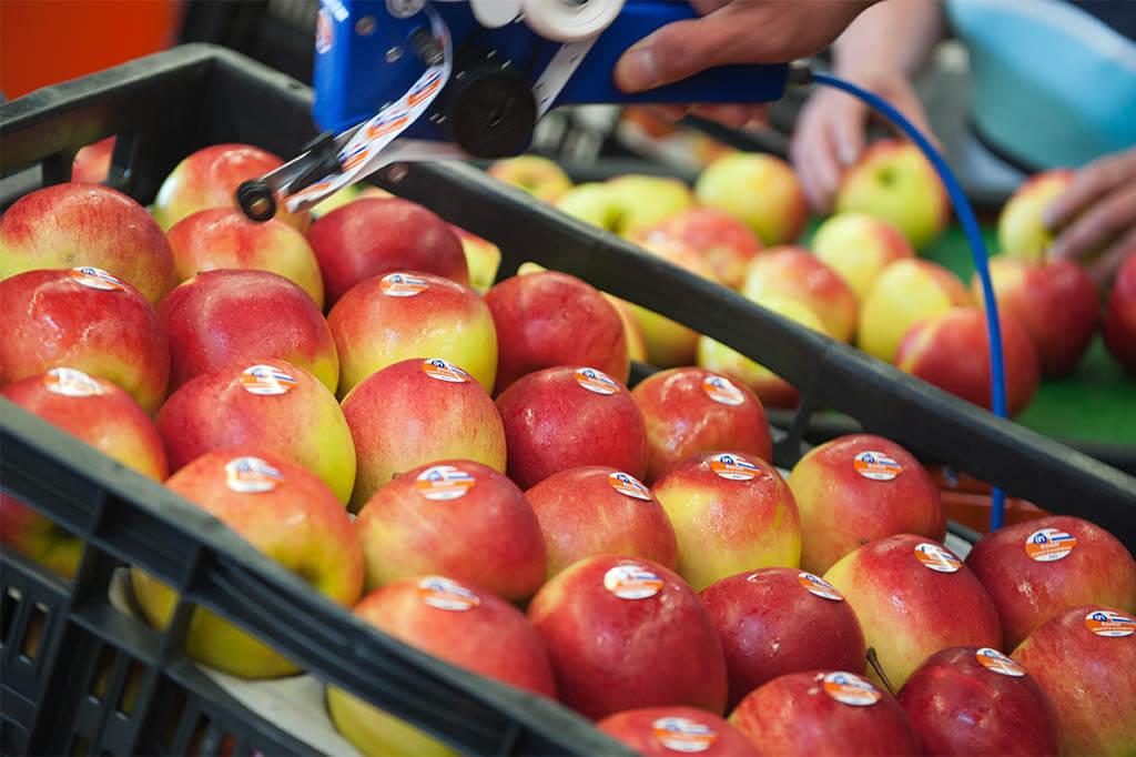 sorteren-en-verpakken-van-fruit-en-groenten
